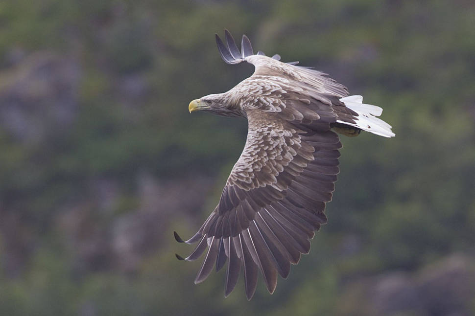 Sea Eagle Safari in Norway - Best Time