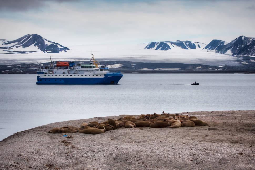 Walrus in Norway - Best Season