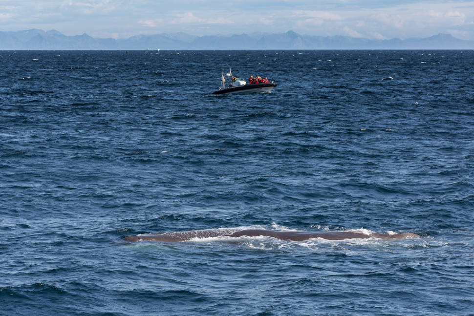 Best time to see Whale Safari