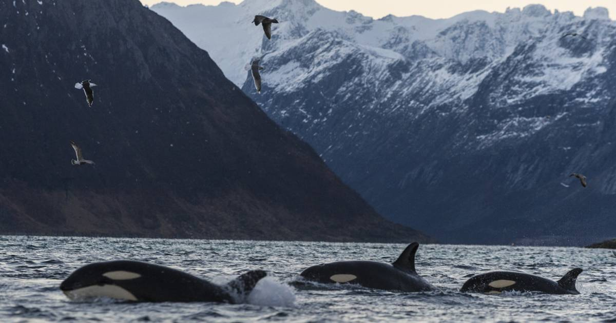 Whale Safari in Norway - Best Time