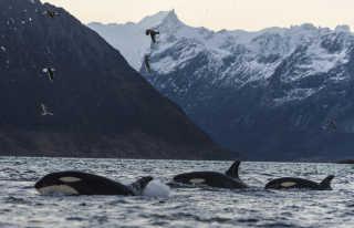 Whale Safari
