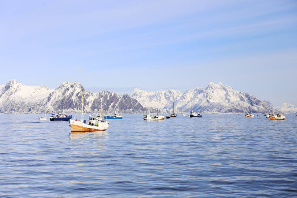 Best time for World Cod Fishing Championship in Norway