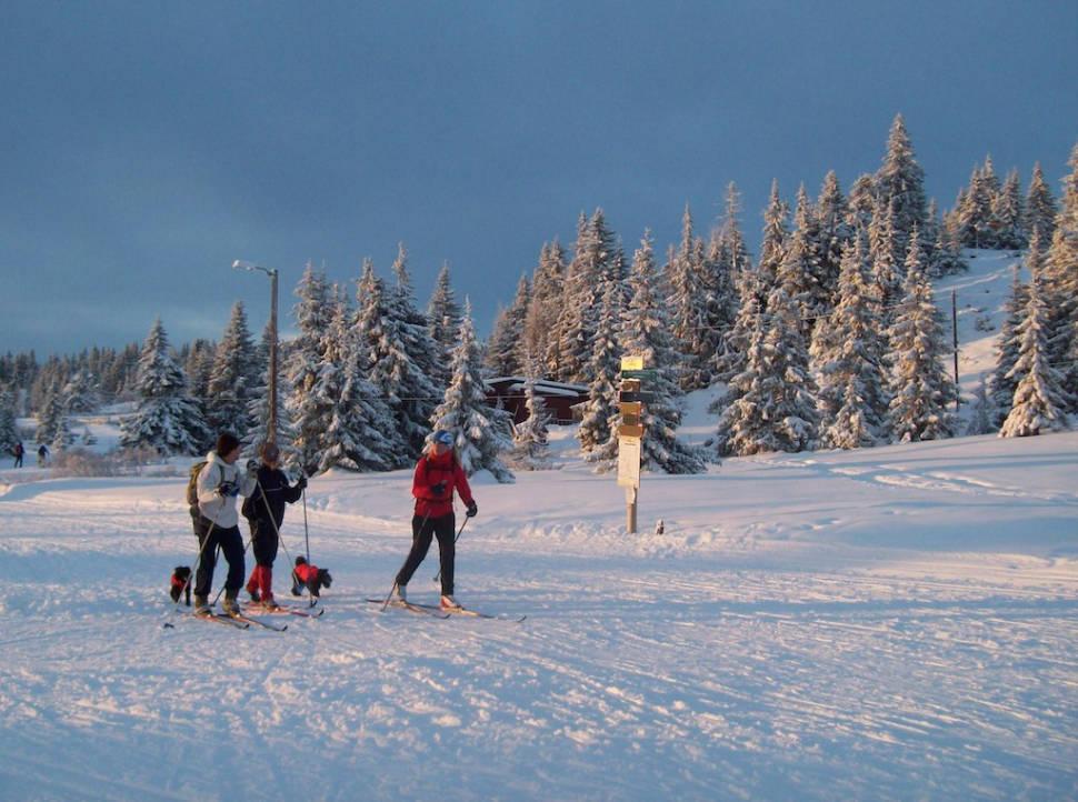 Cross-Country Skiing in Oslo - Best Season