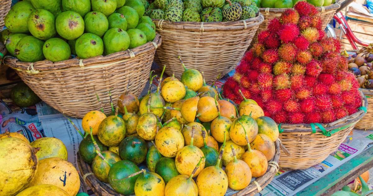 Fruits Season (Rain Season) in Panama - Best Time