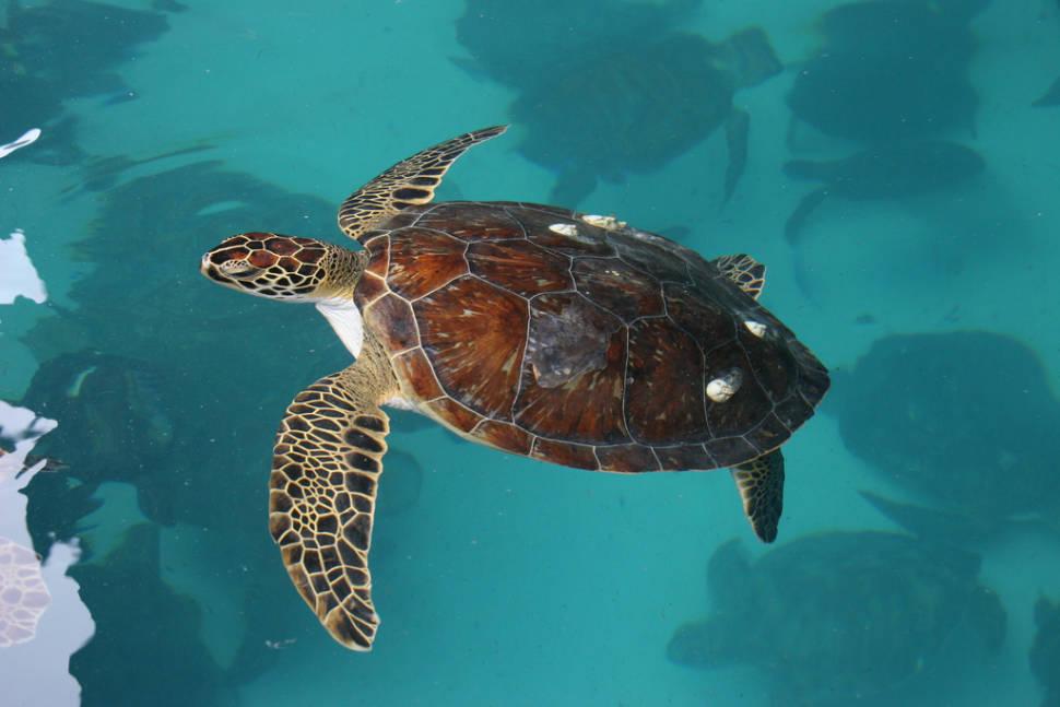 Watching Sea Turtles in Panama - Best Time