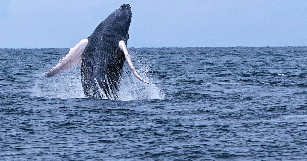 Whale Watching in Panama - Best Time