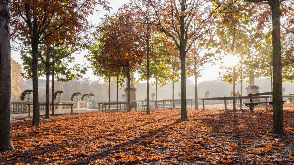 Parks and Gardens in Autumn Foliage in Paris - Best Time