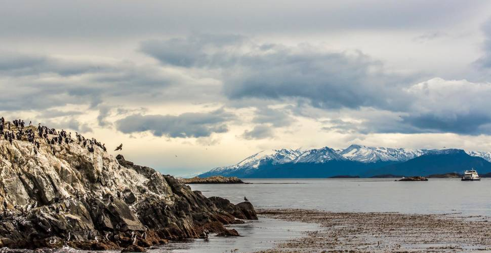 Seabirds of the Beagle Channel