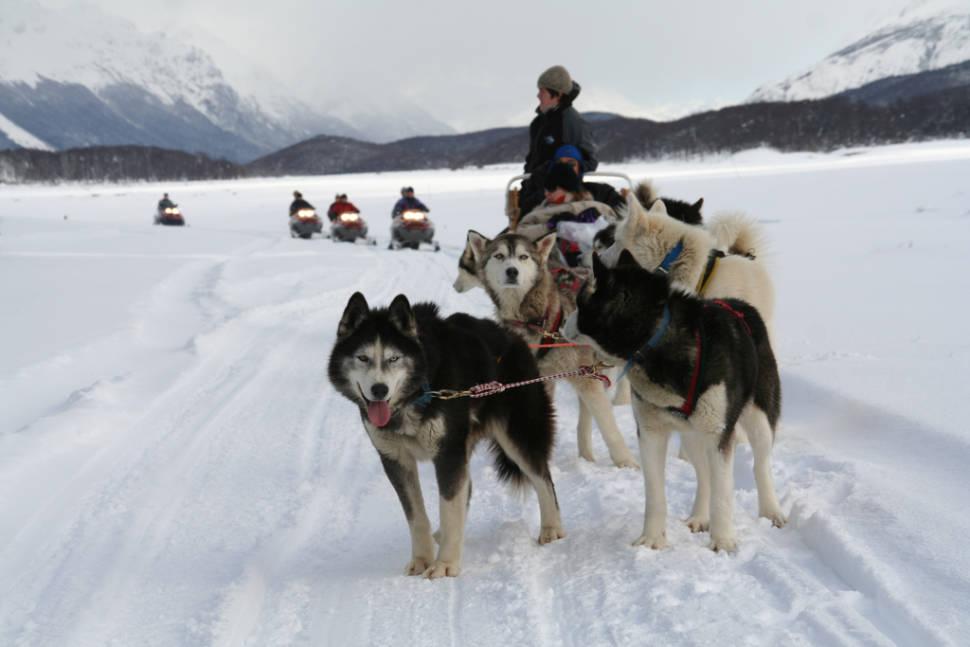 Huskies in Ushuaia