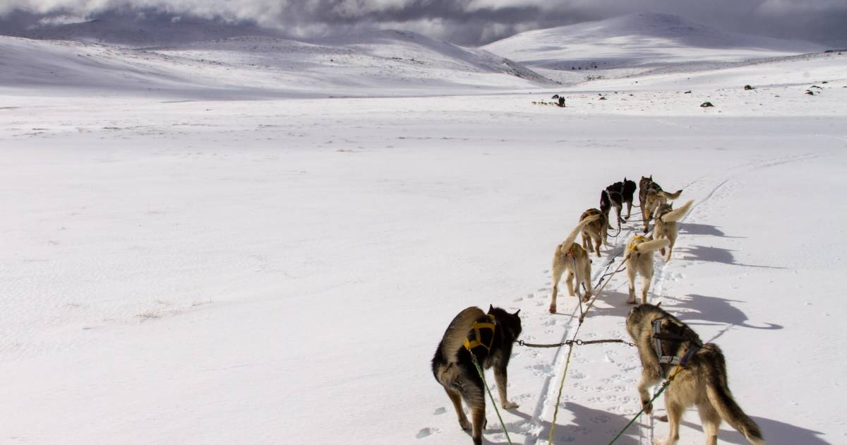 Dog Sledding in Patagonia - Best Time