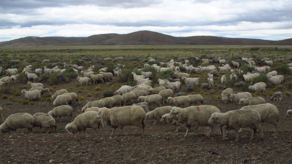 Best time to see Grazing Sheep in Patagonia