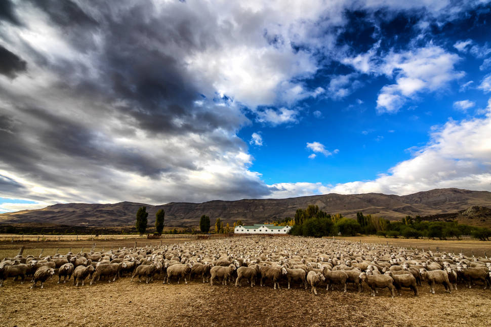 Best time for Grazing Sheep in Patagonia