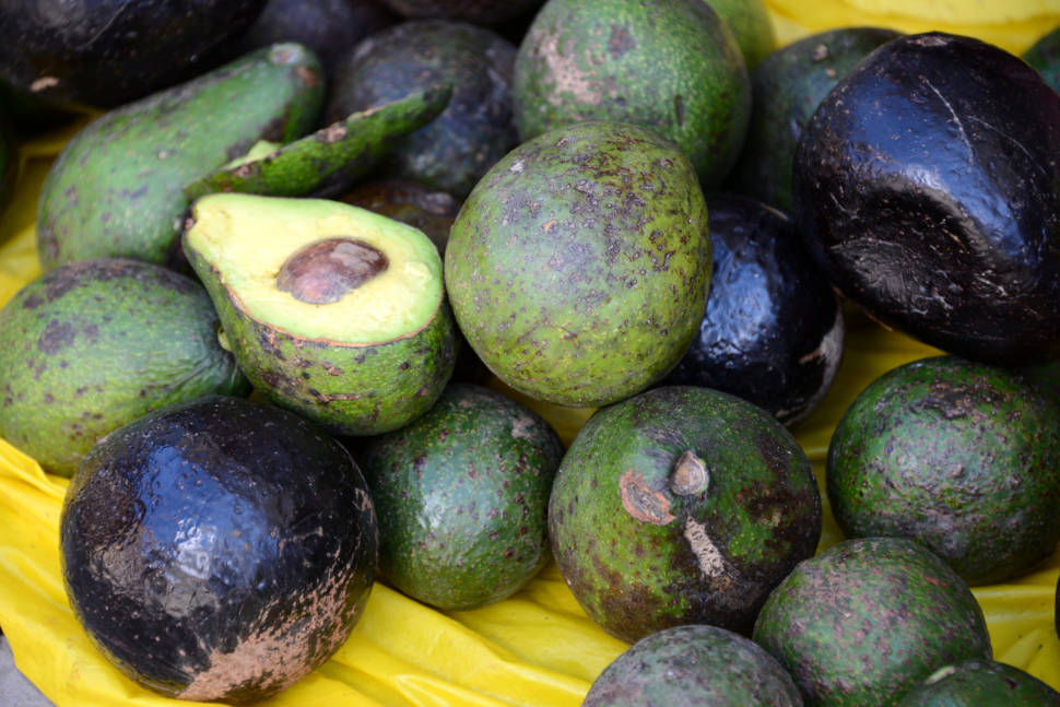 Avocado in Peru - Best Season