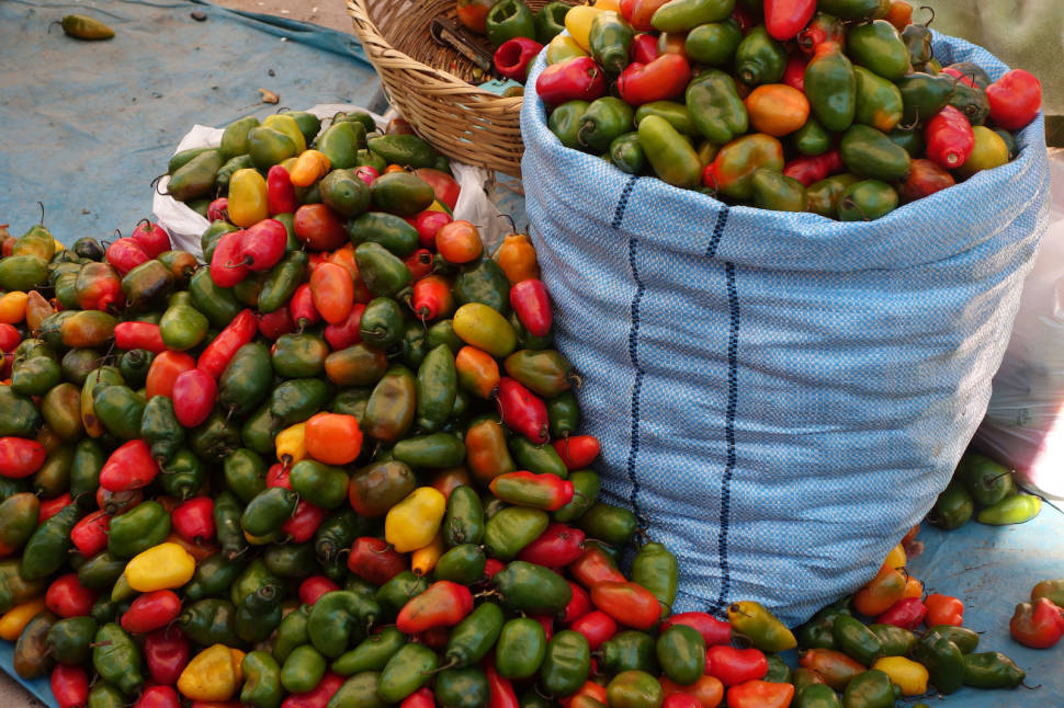 Best time for Fresh Chili Peppers in Peru