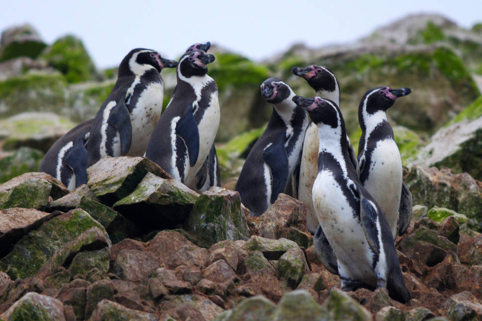 Best time for Marine Fauna of the Ballestas Islands