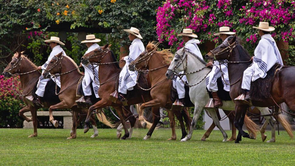 Peruvian Paso Horse Competitions in Peru - Best Season