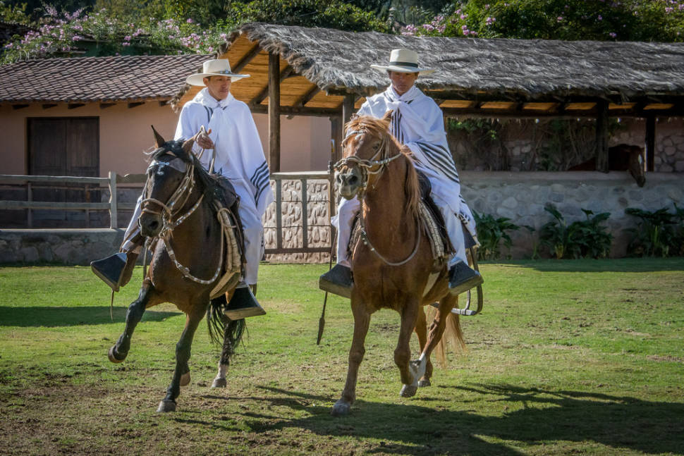 Best time to see Peruvian Paso Horse Competitions in Peru