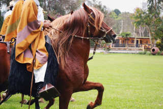 Peruvian Paso Horse Competitions