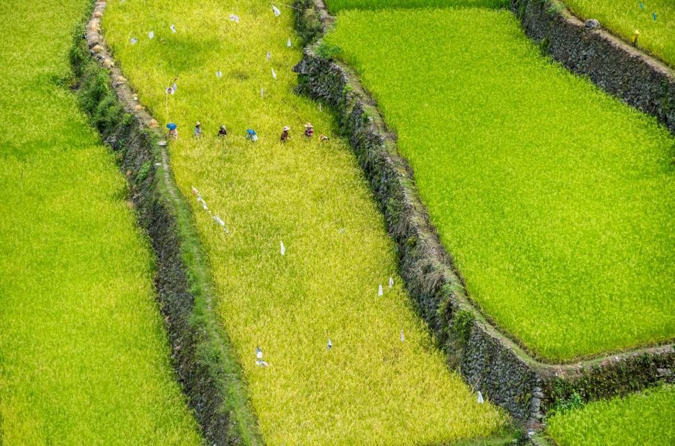Banaue and Batad Rice Terraces in Philippines - Best Season