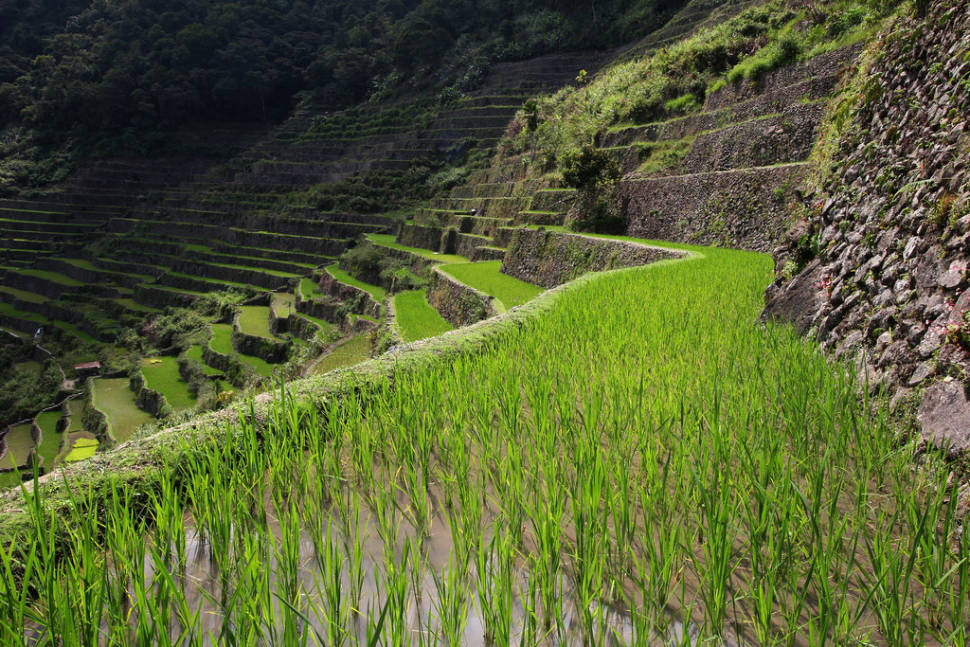 Best time for Banaue and Batad Rice Terraces in Philippines