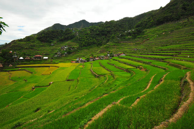 Best time to see Banaue and Batad Rice Terraces in Philippines