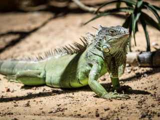 Chameleons and Other Reptiles in Algarve