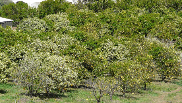 Best time for Orange Blossom in Portugal