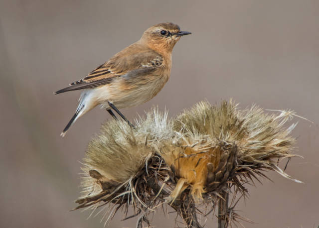 Sagres Birdwatching in Portugal - Best Season