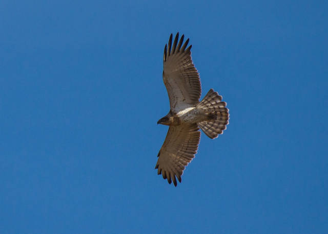Best time for Sagres Birdwatching in Portugal