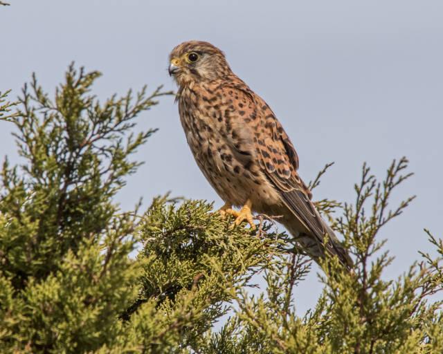 Sagres Birdwatching in Portugal - Best Time