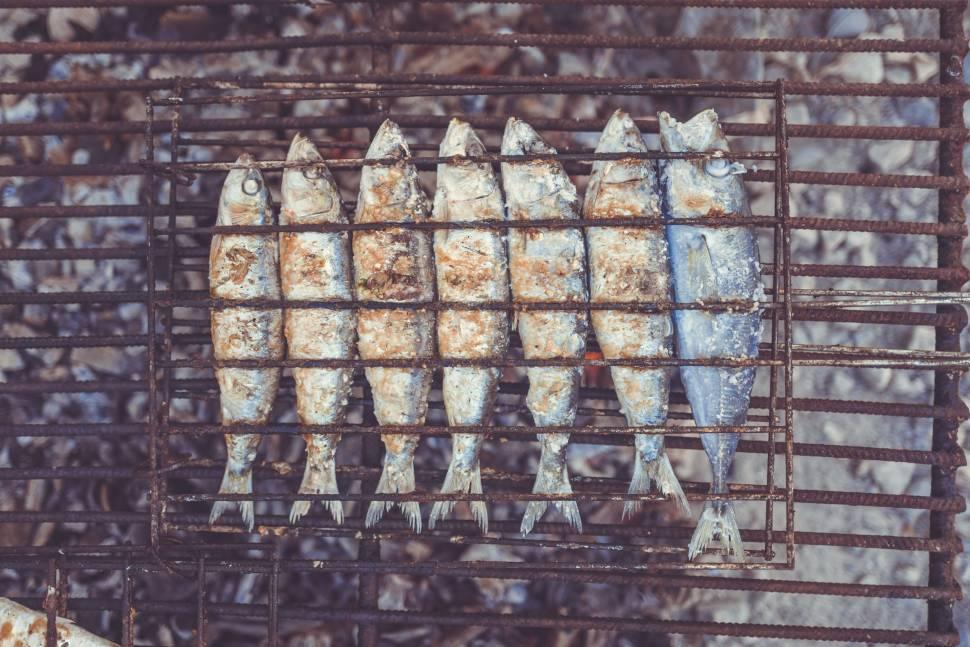 Sardines Season in Portugal - Best Time