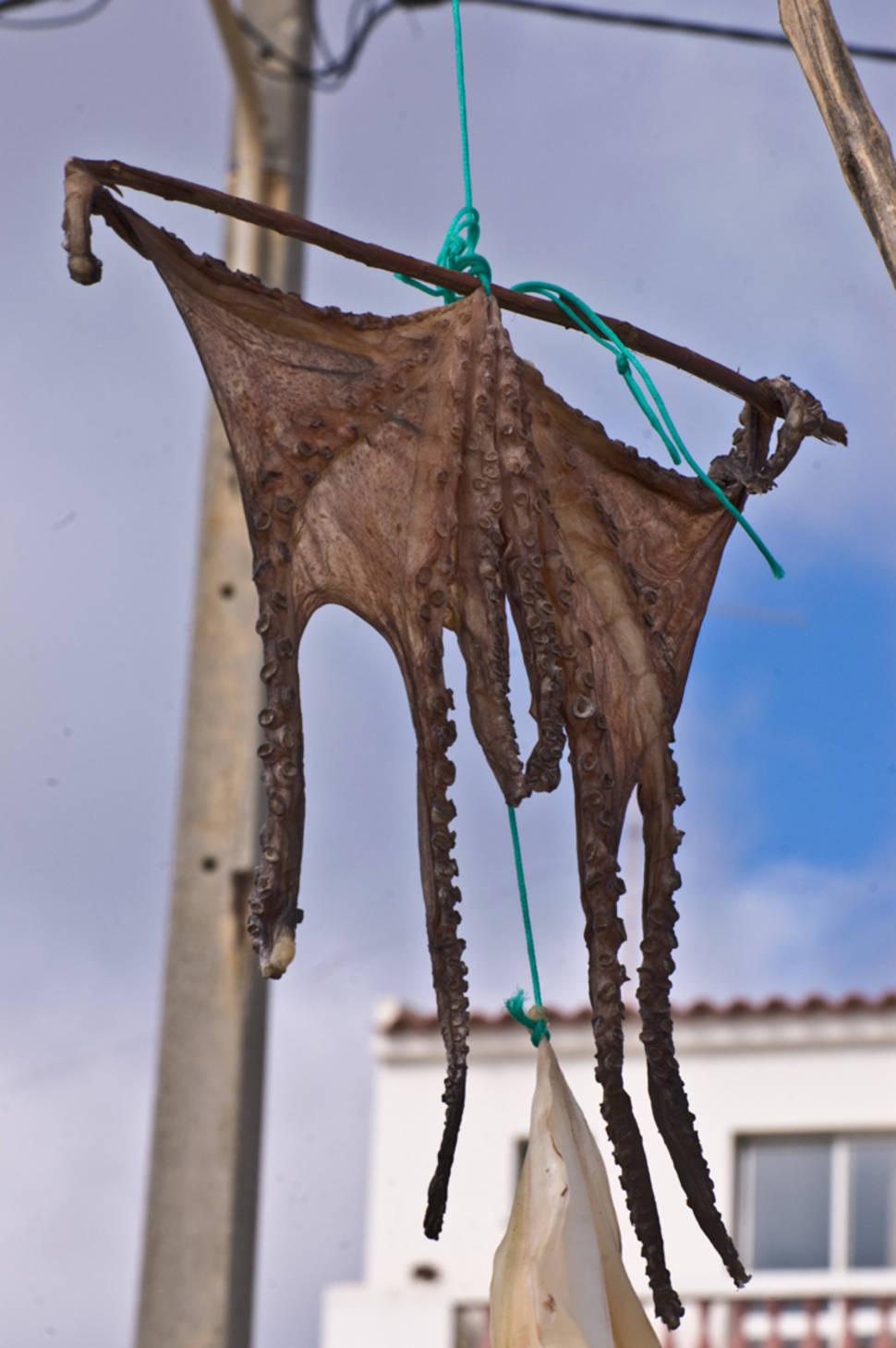 Sun-Dried Octopus in Portugal - Best Season