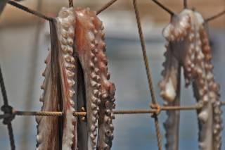 Sun-Dried Octopus