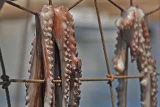 Sun-Dried Octopus