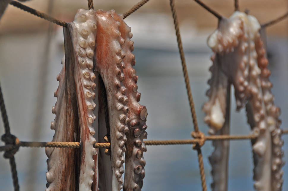 Sun-Dried Octopus in Portugal - Best Time