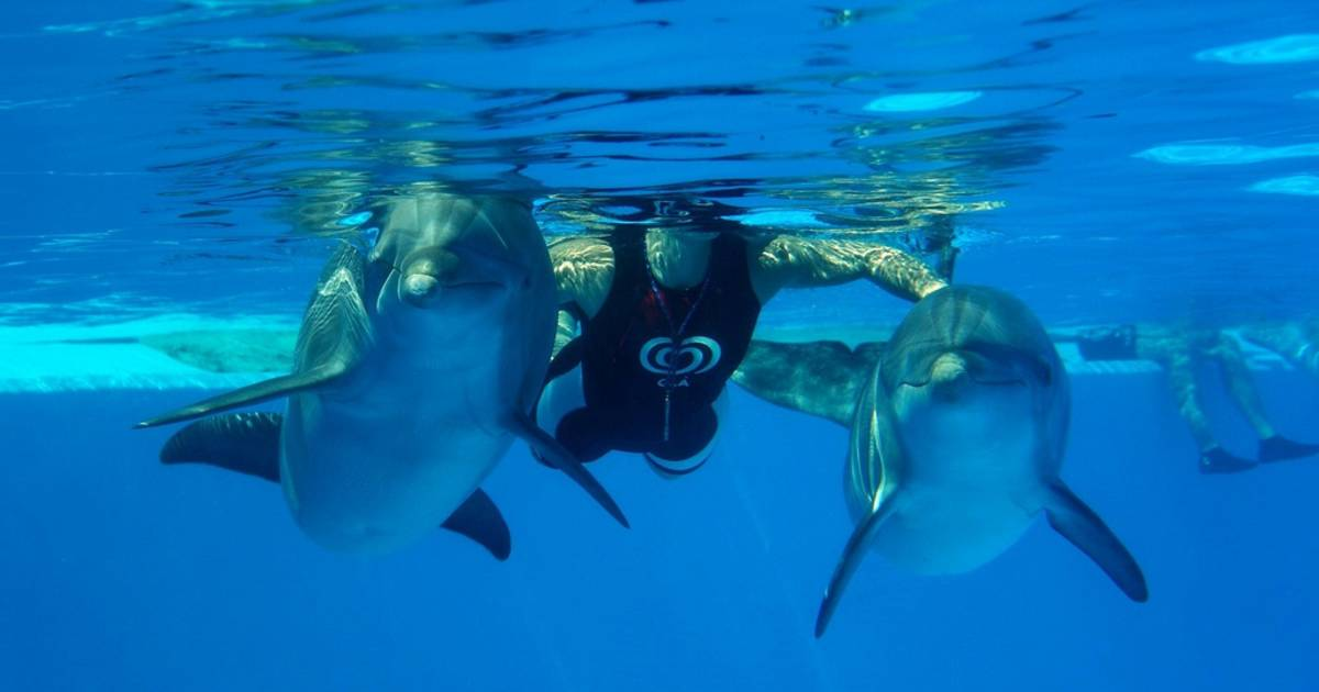 Swimming with Dolphins in Portugal - Best Time