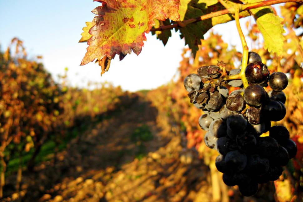 Wine Season in Portugal - Best Season