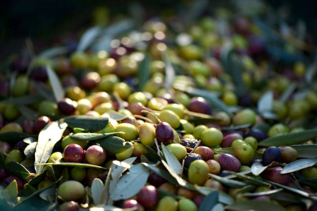 Olive Picking in Provence & French Riviera - Best Time