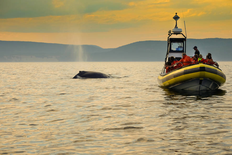 Whale watching at Tadoussac