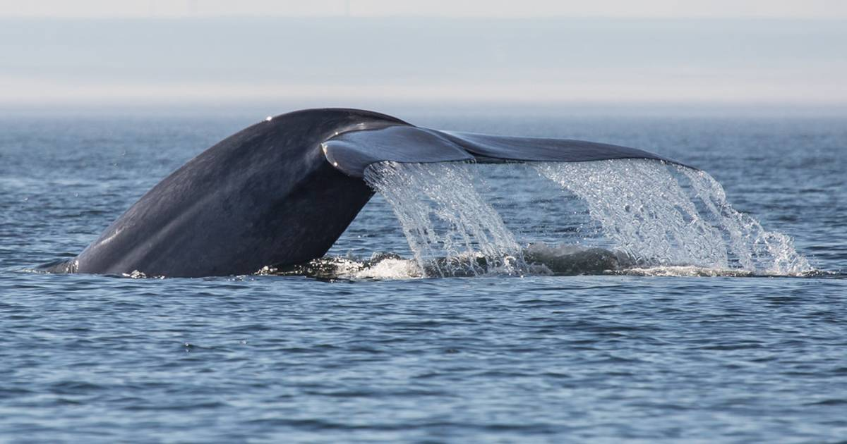 Whale Watching in Quebec - Best Time