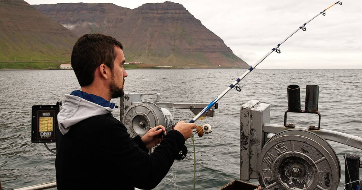 Sea Angling in Reykjavik - Best Time