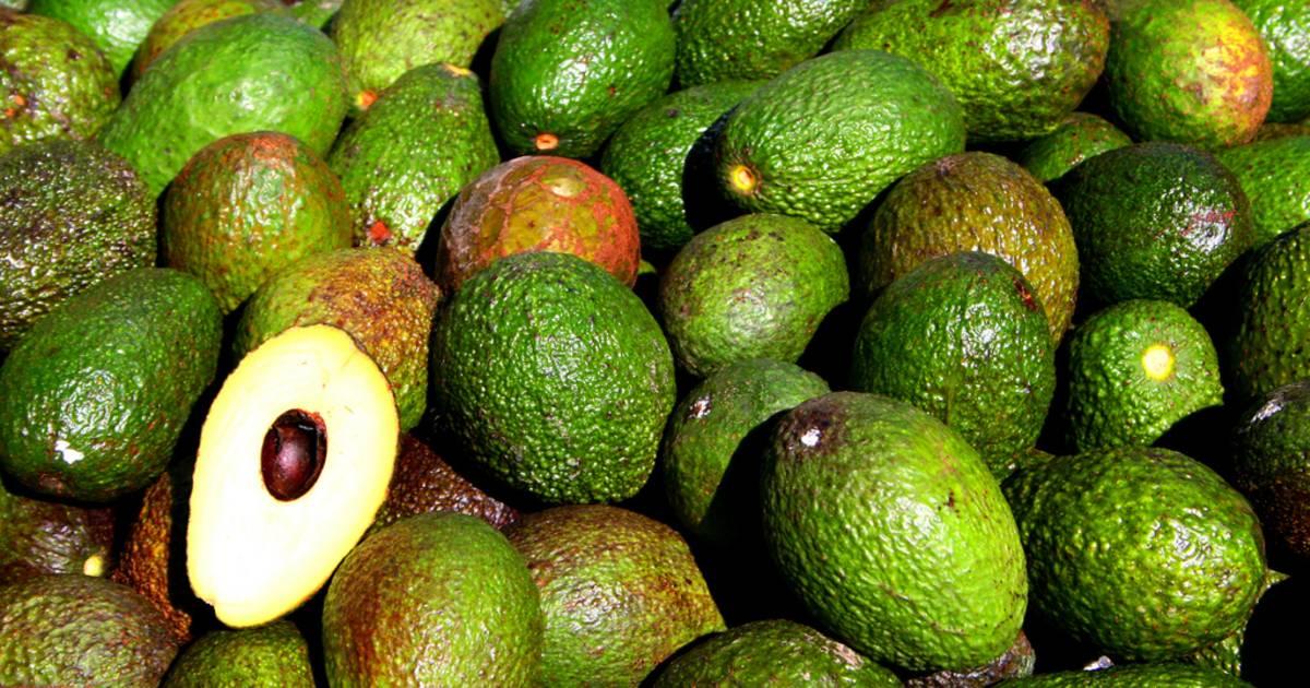 Avocado in Rio de Janeiro - Best Time