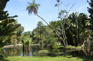 Botanical Garden or Jardim Botânico