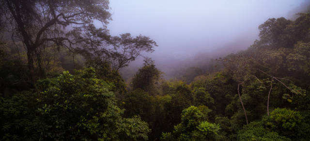 Best time to see Tijuca Forest in Rio de Janeiro