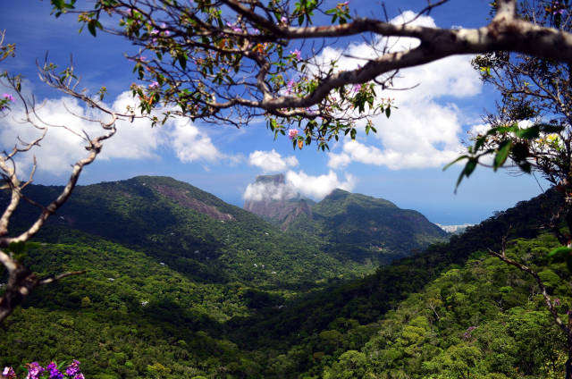 Tijuca Forest in Rio de Janeiro - Best Time
