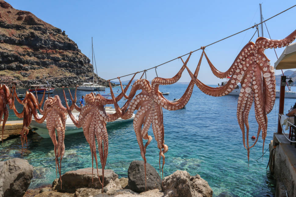 Octopus Season in Santorini - Best Time