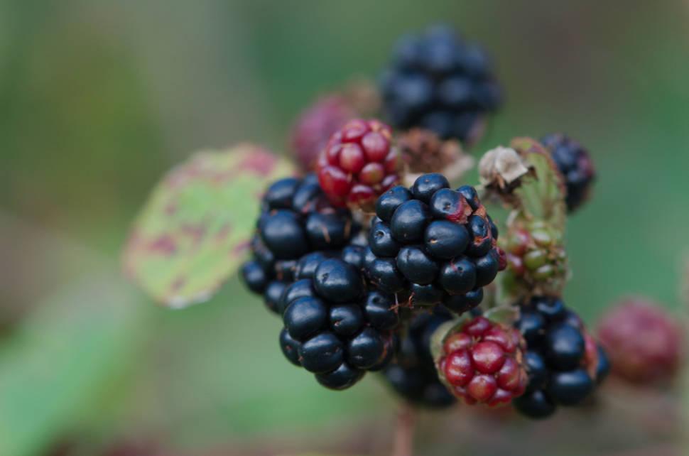 Berry Season in Scotland - Best Time