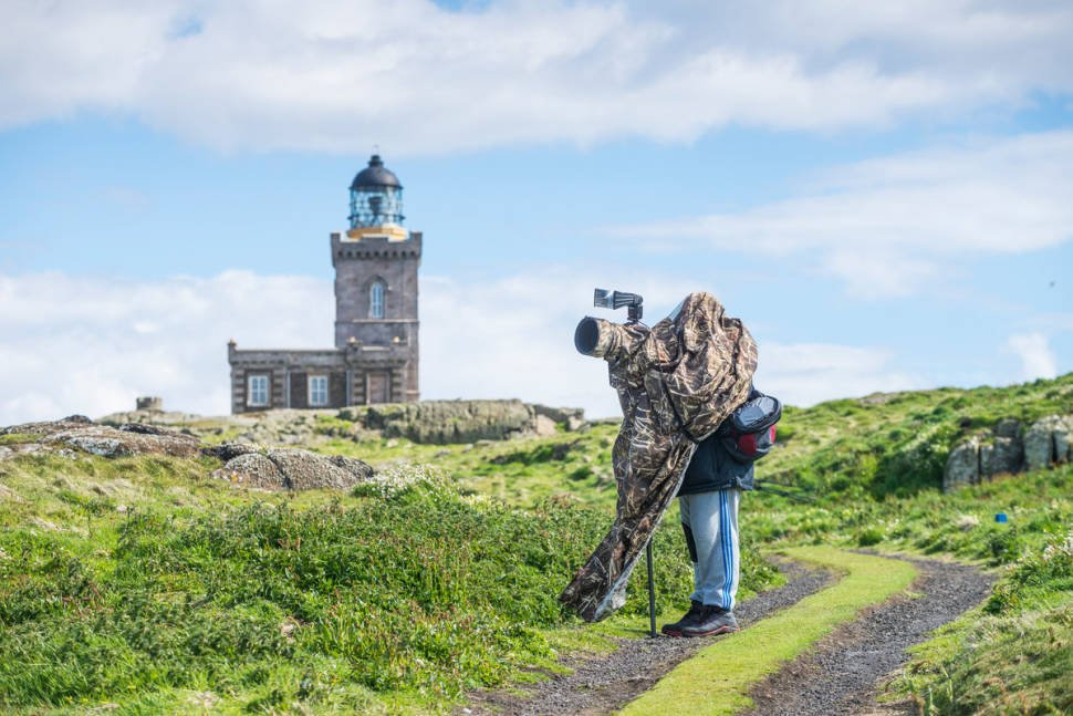 Birdwatching in Scotland - Best Season