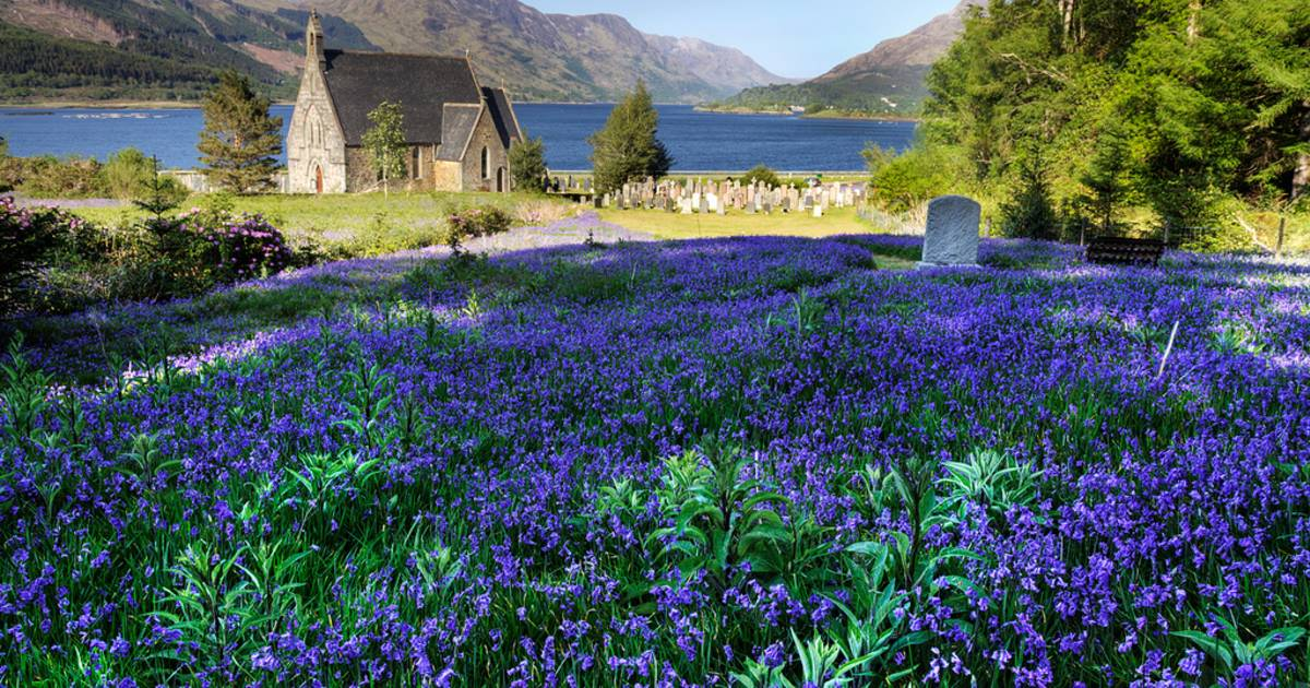Blooming Bluebells in Scotland - Best Time