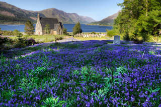 Blooming Bluebells